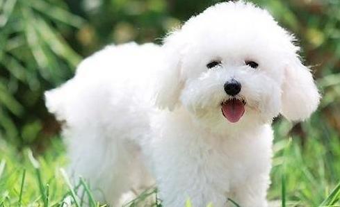 犬 最高寿命